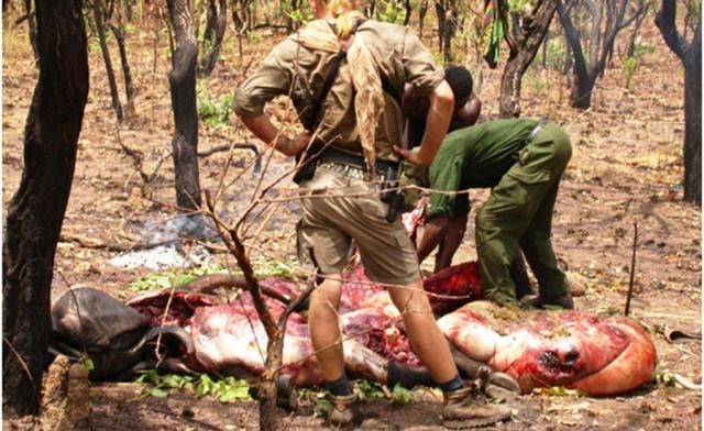 Une partie de chasse dans le Safari CAWA